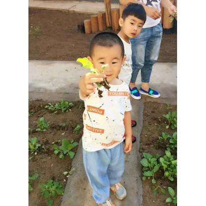香河县圣恩乐思幼儿园――耕种